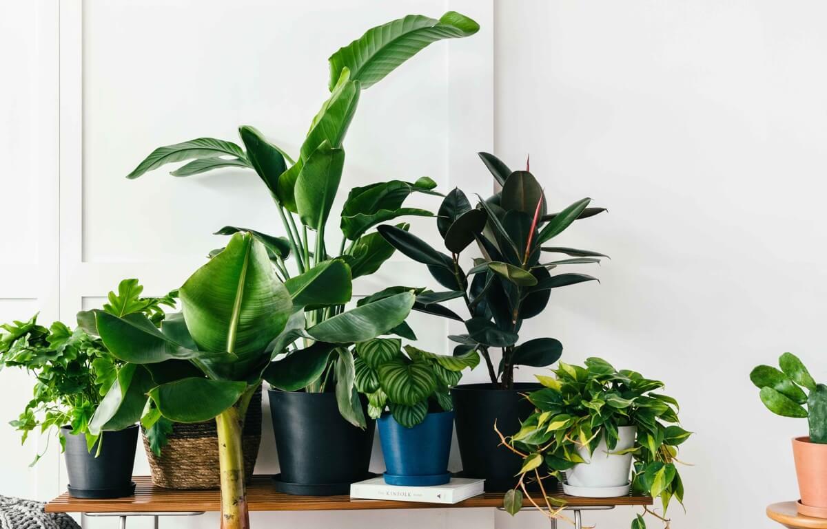 DTC 绿植电商 Bloomscape 获 750 万美元 A 轮投资,解决植物配送以及后续养护问题