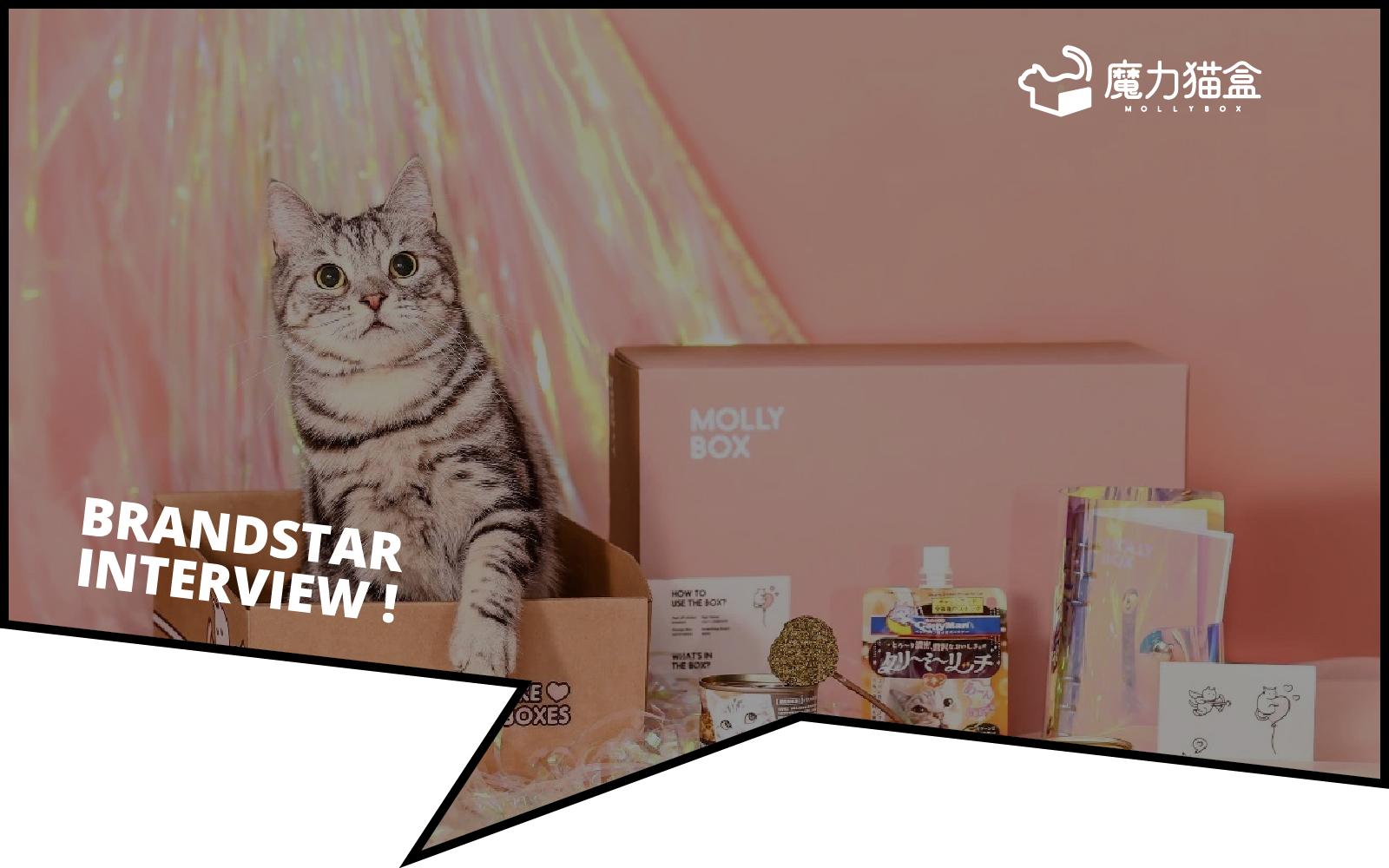 MollyBox 创始人自述:回国扎根宠物行业,我的创业故事和获客之道 | BrandStar专访