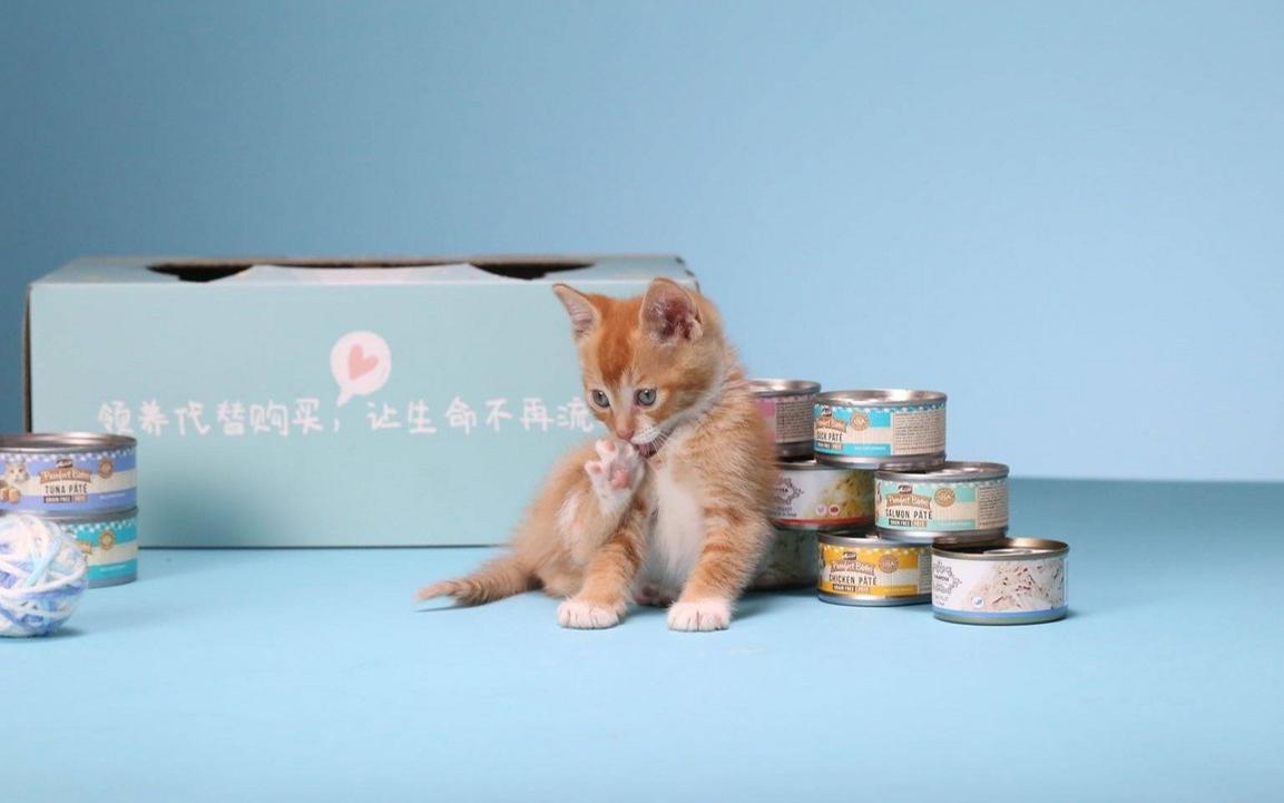 订阅制宠物电商品牌「MollyBox魔力猫盒」完成 1300 万美元 B 轮融资