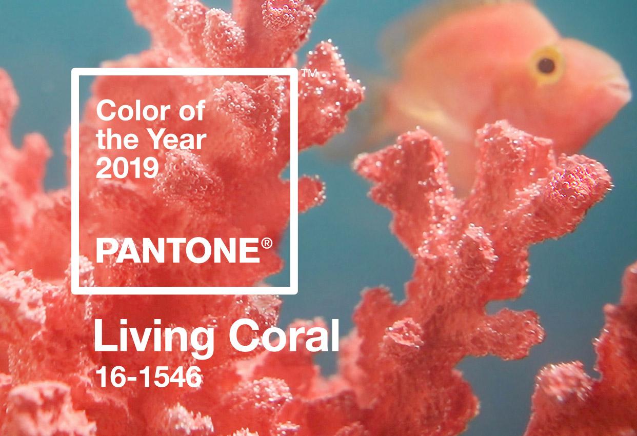 Pantone 发布 2019 年度色彩:Living Coral 珊瑚粉