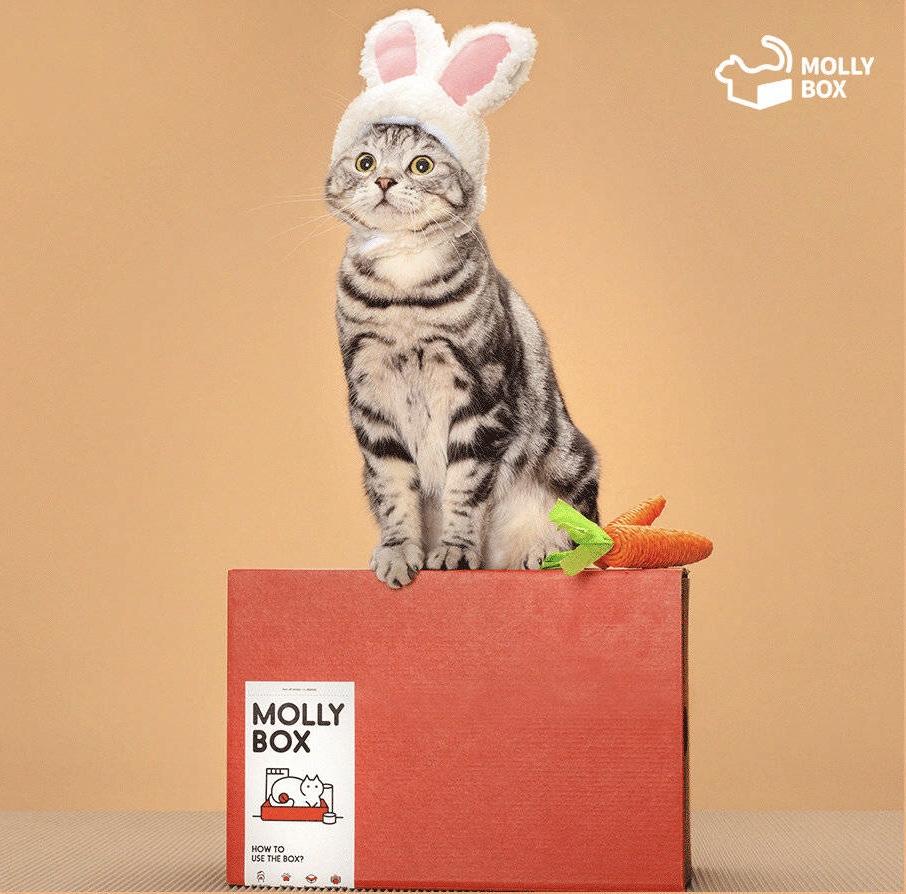 MollyBox