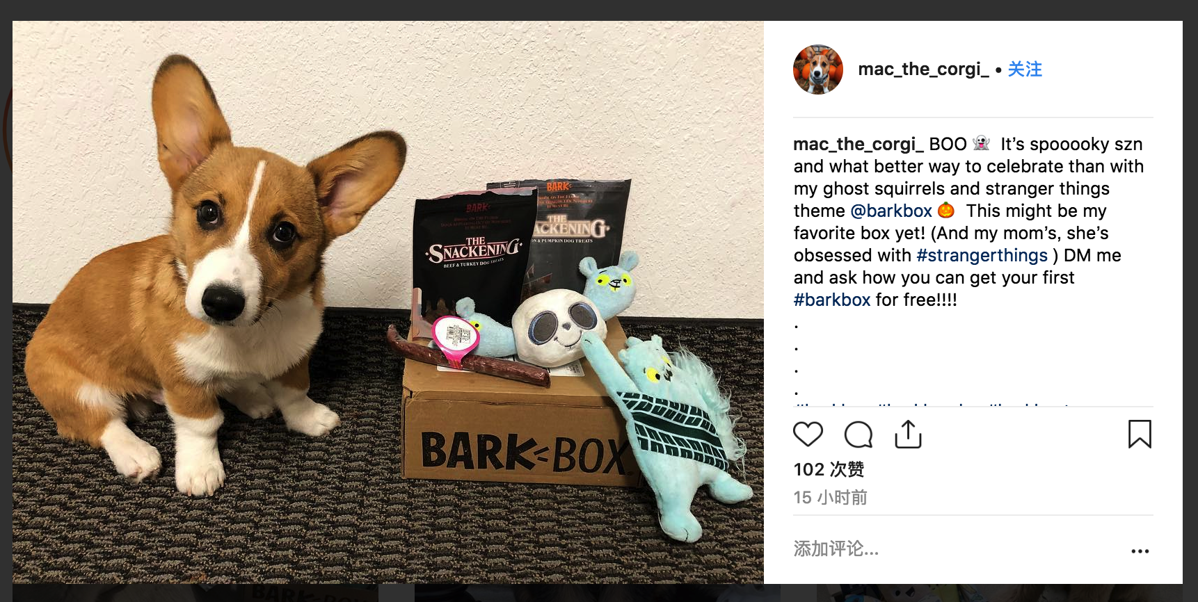 dog and Barbox - instagram