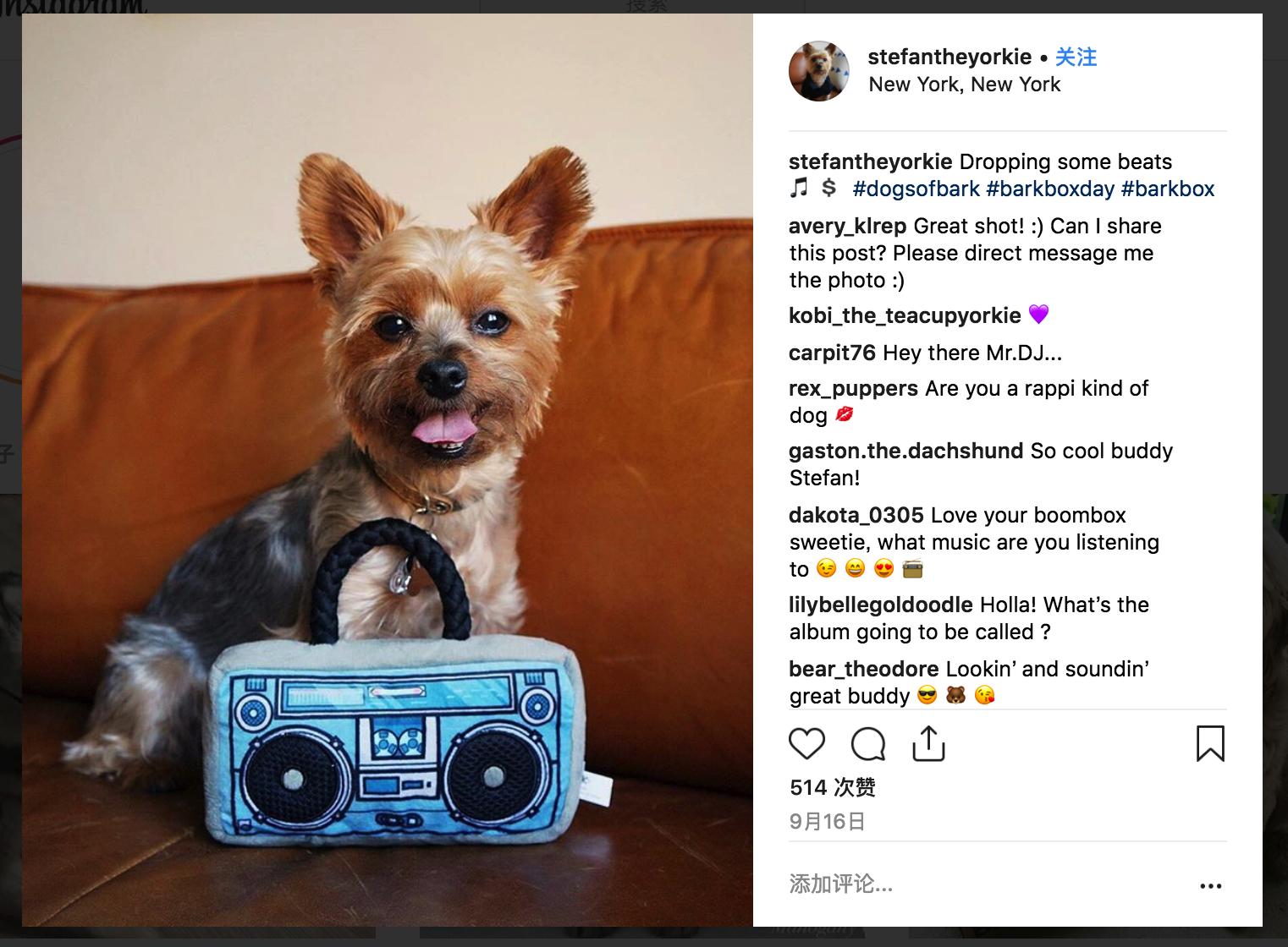 dog & Barkbox on instagram